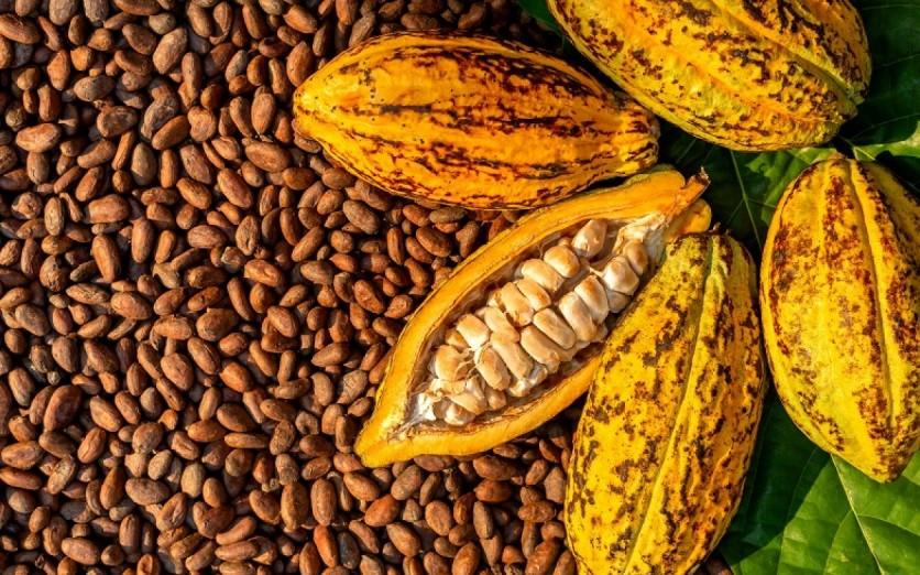 EXPORTACIÓN DE CACAO Y CAFÉ PASO A PASO