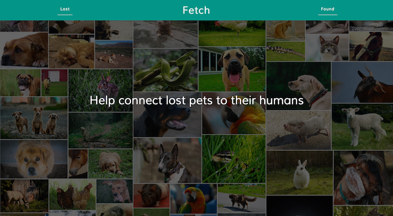 Screenshot of Fetch