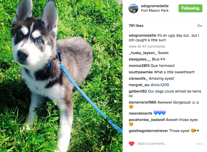 Tips and Tricks to Grow Puppy Profiles on Instagram