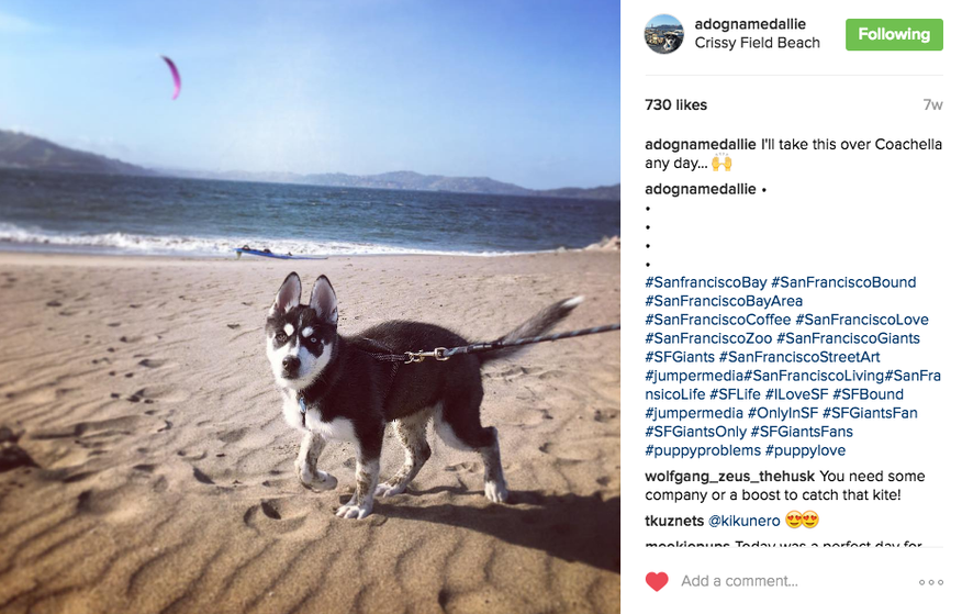 Dog Instagram hashtags - Best ones to use?