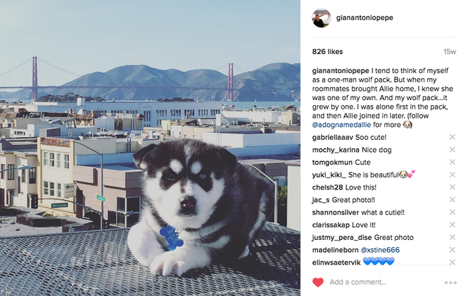 What are the best dog instagram names?
