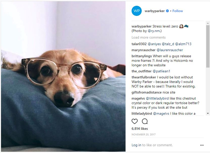 Dog in glasses Instagram photo as part of Warby Barker marketing campaign