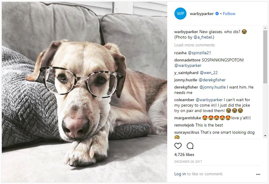 Dog with glasses fro Warby Parker Instagram Feed