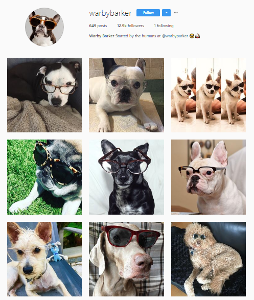 Dogs in glasses Instagram feed