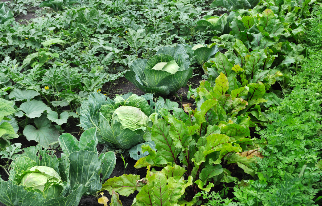abundant-mixed-veggie-plants-in-soil