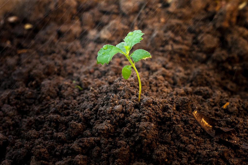 seedlinginsoil