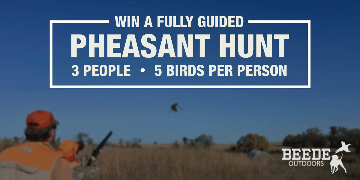 Fully Guided 3-Person Pheasant Hunt