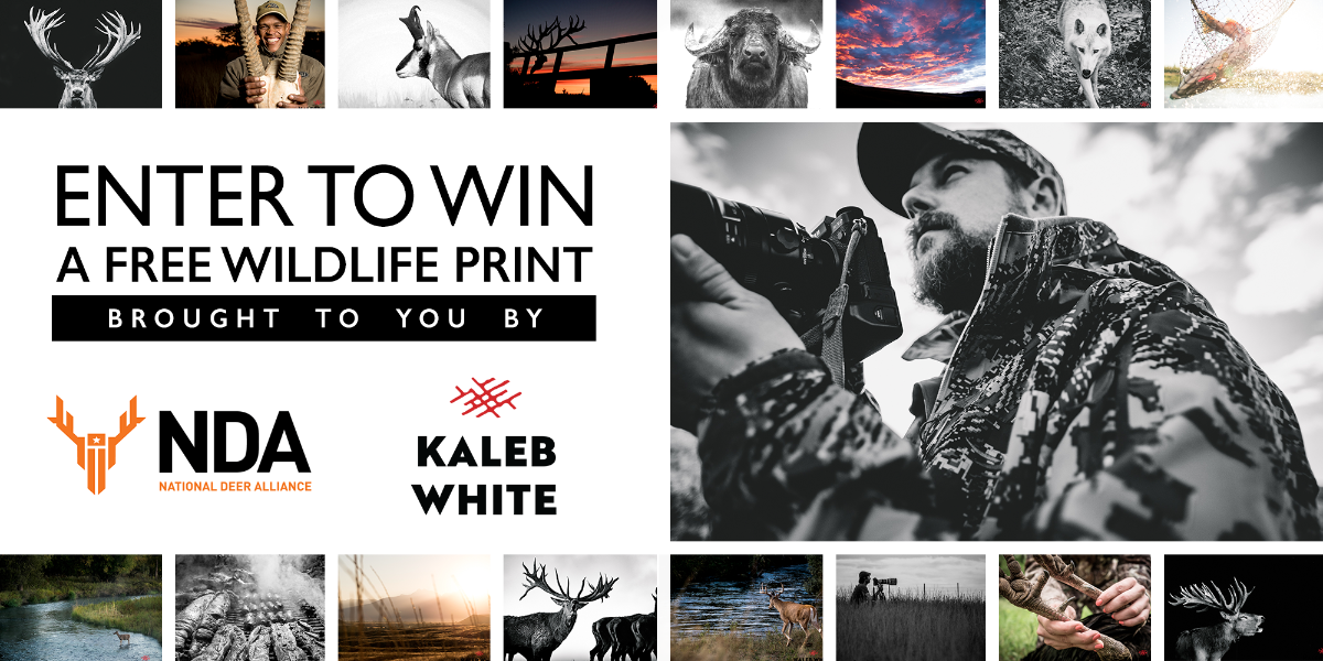 Win a Professional Wildlife Print! A $300 value!