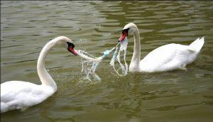 tu-pyme-ayuda-a-cuidar-el-medio-ambiente