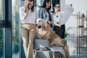 se-una-pyme-pet-friendly-este-dia-mundial-del-perro