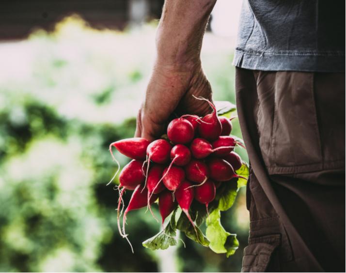 mexico-ingresa-al-top-10-de-exportadores-agroalimentarios