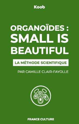 Organoïdes : small is beautiful