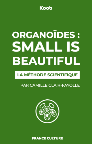 Organoïdes : small is beautiful