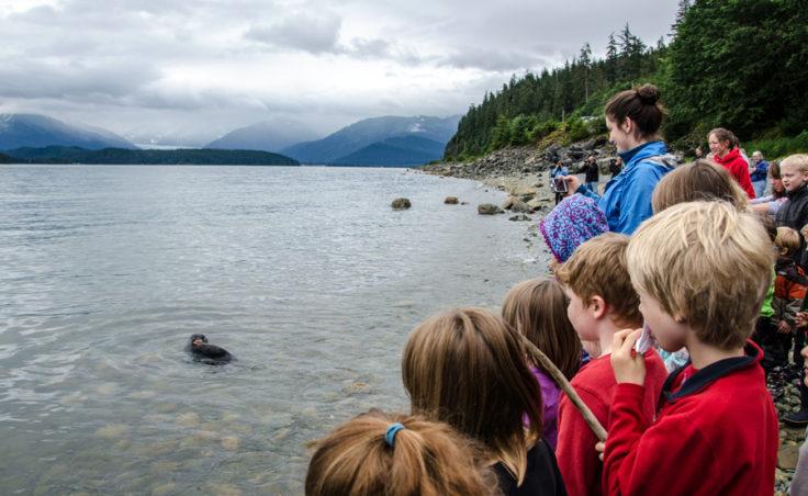 Children line the beach to watch the seals swim.