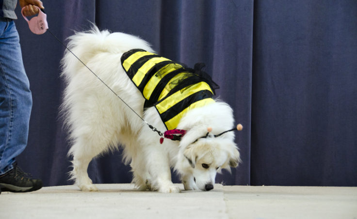 Lilly the bumblebee was most interested in smelling the stage.