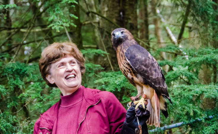 Kathy Maas holds Brutus, a red-tailed hawk that was likely hit by a car. Maas has cared for her since 2003.