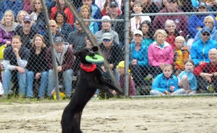 The Super Dog Frisbee Contest.