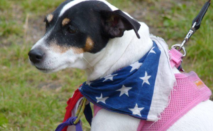 Patriotic pooch in Douglas