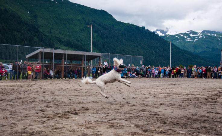 Super Dog Frisbee Contest