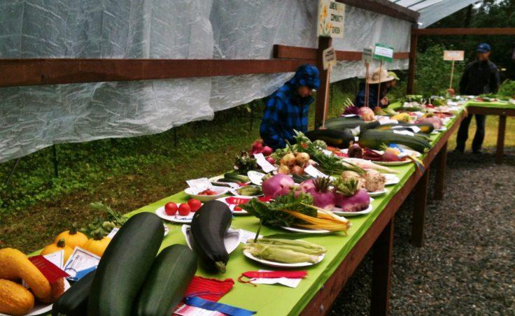 Harvest Fair15
