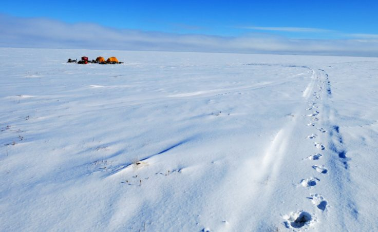 A field camp for scientists studying arctic lakes pitched on one of the lakes they are studying. (Photo by Ned Rozell)