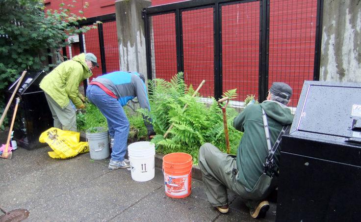 Volunteers pull weeds from green areas. (Photo by Rosemarie Alexander)