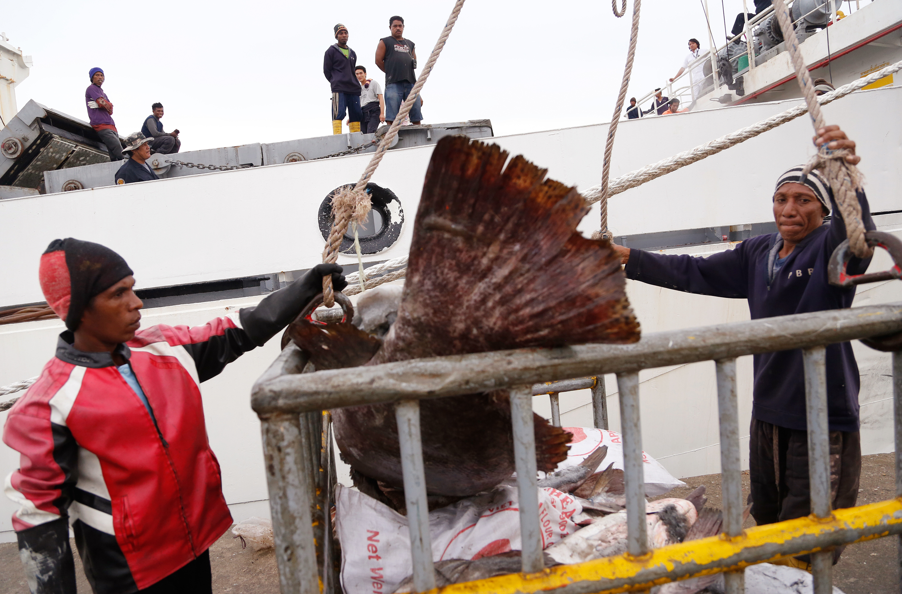 Workers in Benjina, Indonesia, load fish into a cargo ship
