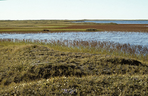Pond on ANWR coastal plain. (Photo courtesy of U.S. Fish and Wildlife Service)