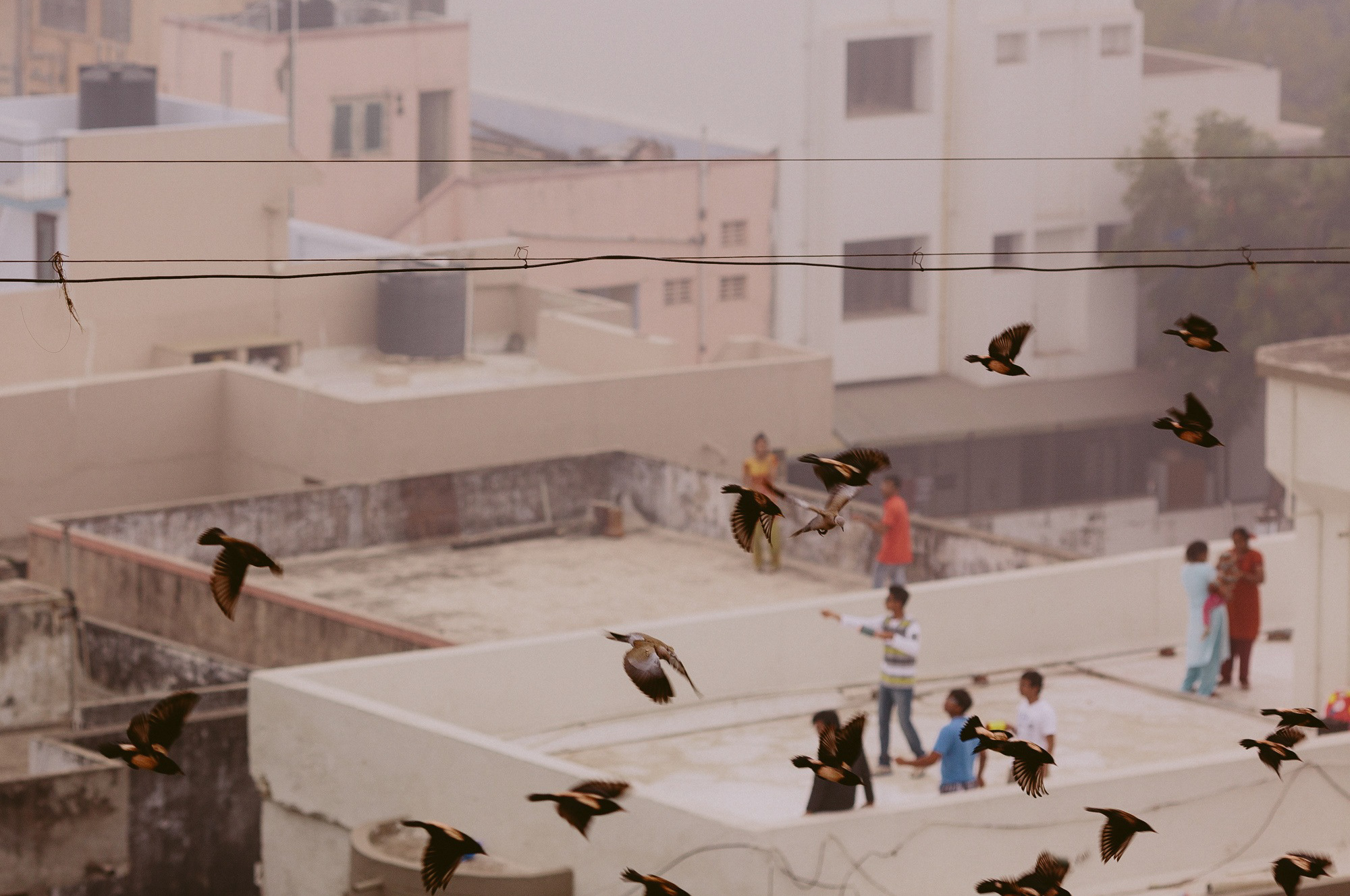let s go fly a million kites and watch them cut each other a rooftop perch is perfect for kite flying nirav patel vsco artist initiative