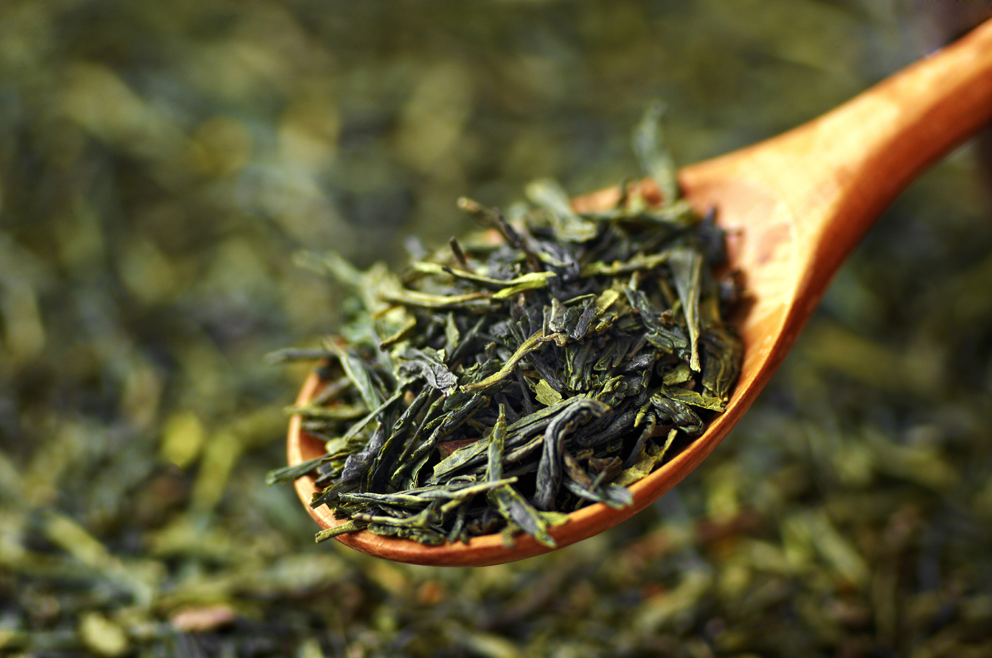 World S Oldest Tea Discovered In An Ancient Chinese