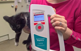 Sushi the kitten, Rachel Trapp, and a microchip scanner