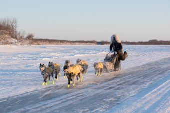 In Jan. 2017, Brent Sass placed second for the second year in a row in the Kuskokwim 300.