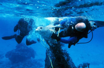 Divers release a seal from fishing gear. Getting entangled in active or abandoned fishing gear often leads to injury or death in marine mammals. (Photo by NOAA Marine Debris Program/Flickr)