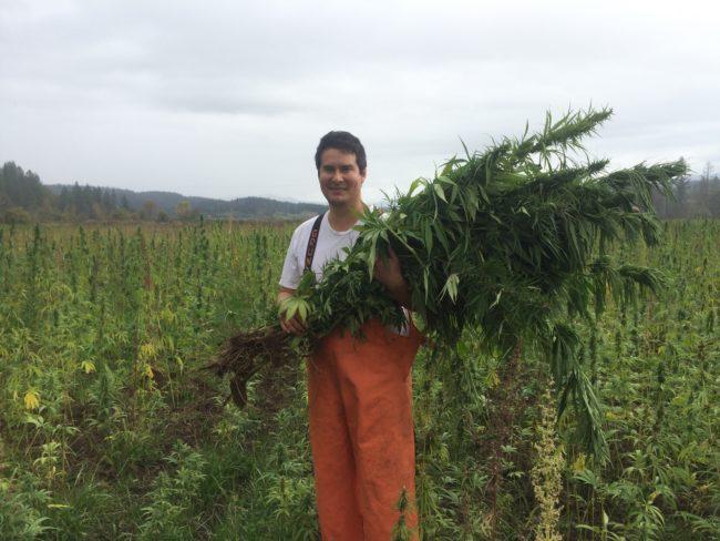 Alaska farmers push for hemp legalization