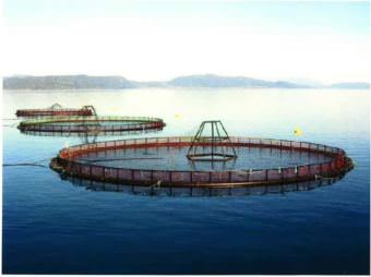 Example photo provided by Cooke Aquaculture division to Clallam County to show what salmon farming net pens near Port Angeles would look like. (Photo courtesy of American Gold Seafoods via Clallam County)