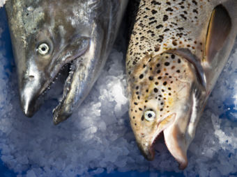 Washington state posted an identification guide to help fishers distinguish native Pacific salmon species from Atlantic salmon on the right. (Photo by Megan Farmer/KUOW)