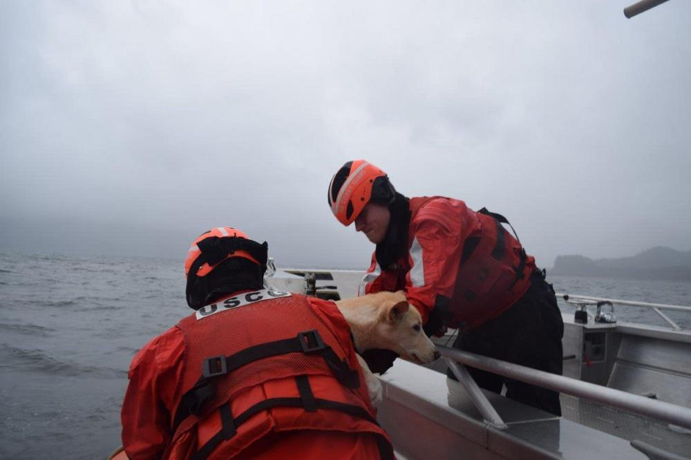 Crewmembers from the Coast Guard Cutter Chandeleur rescue a dog from a 34-foot vessel that was taking on water near Montague Island. (Photo courtesy Coast Guard)
