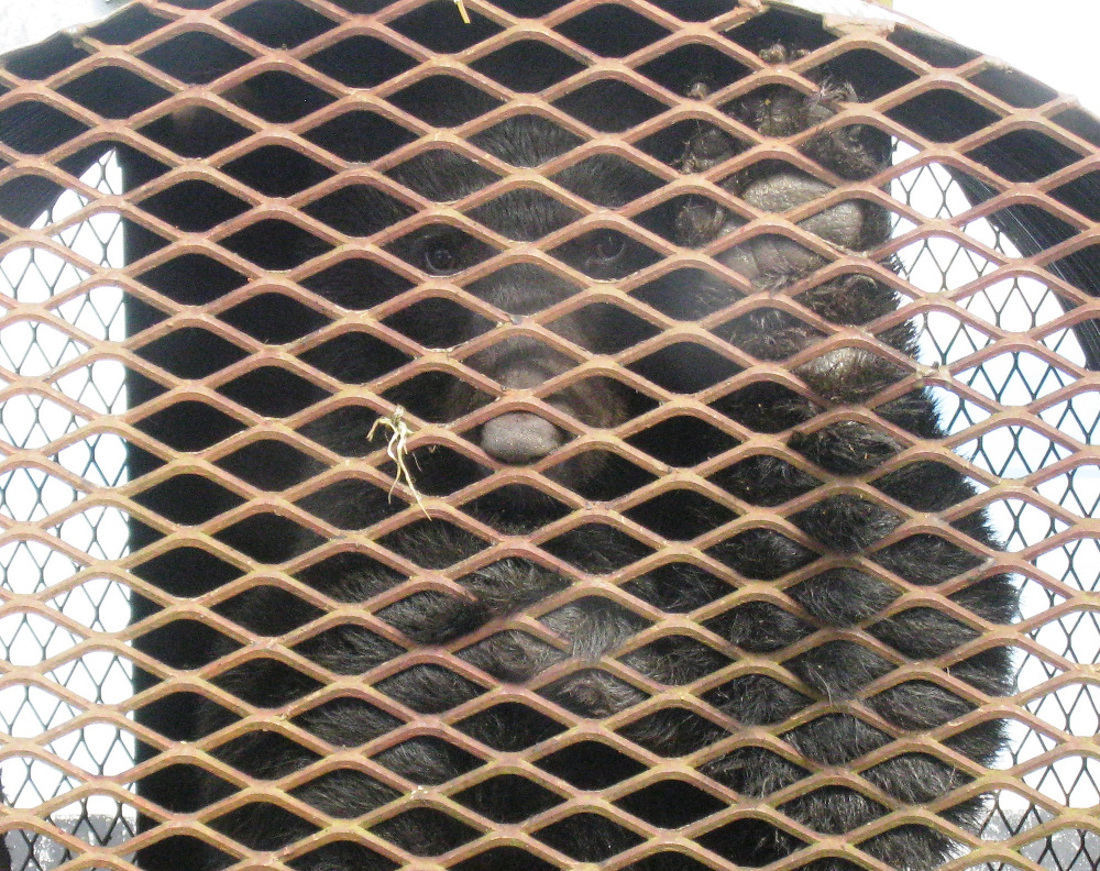 Fish and game relocates two nuisance bears from petersburg for Fish and game office near me