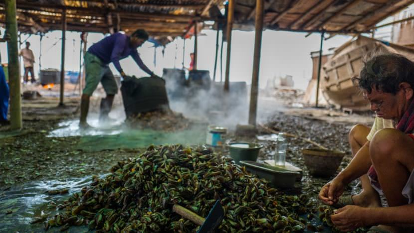 Workers in Muara Angke, Indonesia, steam and shuck mussels pulled from the waters around Jakarta. Scientists have studied how micro plastics absorb toxins they are in proximity to and how they are then taken up into the food chain in mussels and other shellfish.