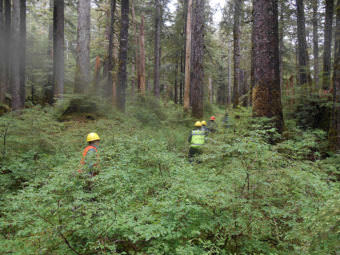 A U.S. Forest Service timber crew on Kosciusko Island (Photo courtesy U.S. Forest Service)