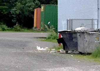 A bear peaks from behind a dumpster near McGivney's at the Mendenhall Mall on July, 17, 2017. (Photo courtesy Quinn Tracy)
