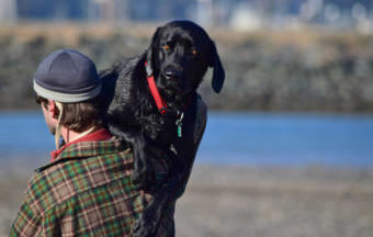 Daniel Carson carries his dog Cody across Sandy Beach on a sunny Sunday, March 1, 2015. Cody's paws are sensitive, Carson explained, and he has problems with the beach sand.