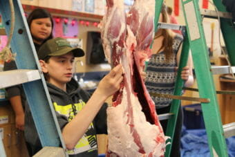 A student at Pacific High tries his hand at processing a locally harvested deer. (Photo by KCAW)