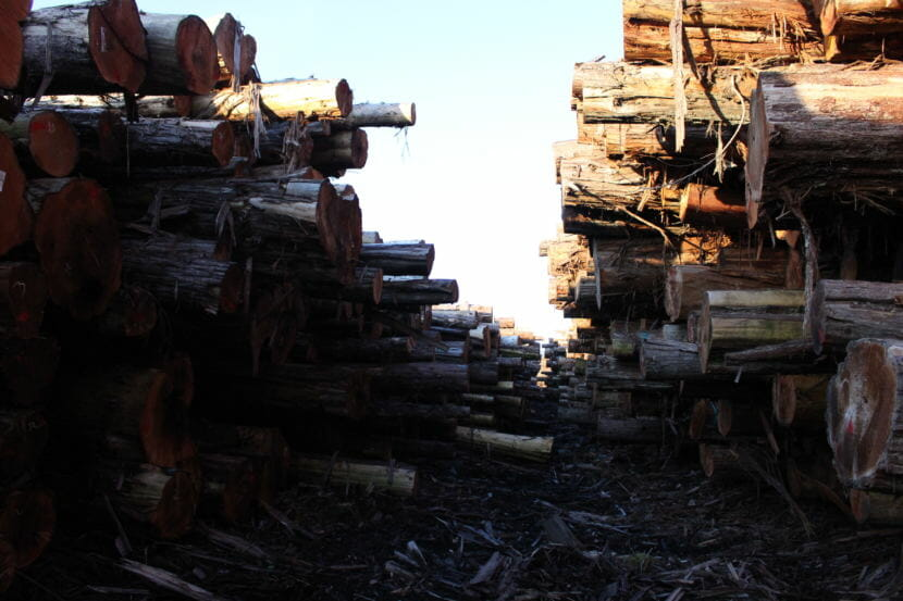The log yard at Viking Lumber (Photo by Elizabeth Jenkins/Alaska's Energy Desk) 12/05/17