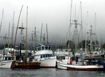 "Trollers in Sitka's Eliason Harbor. Extended king closures worry many. ""There's so much down time that a guy's got to get another job,"" troller Caven Pfeiffer told the Sitka Advisory Committee. (KCAW file photo)"