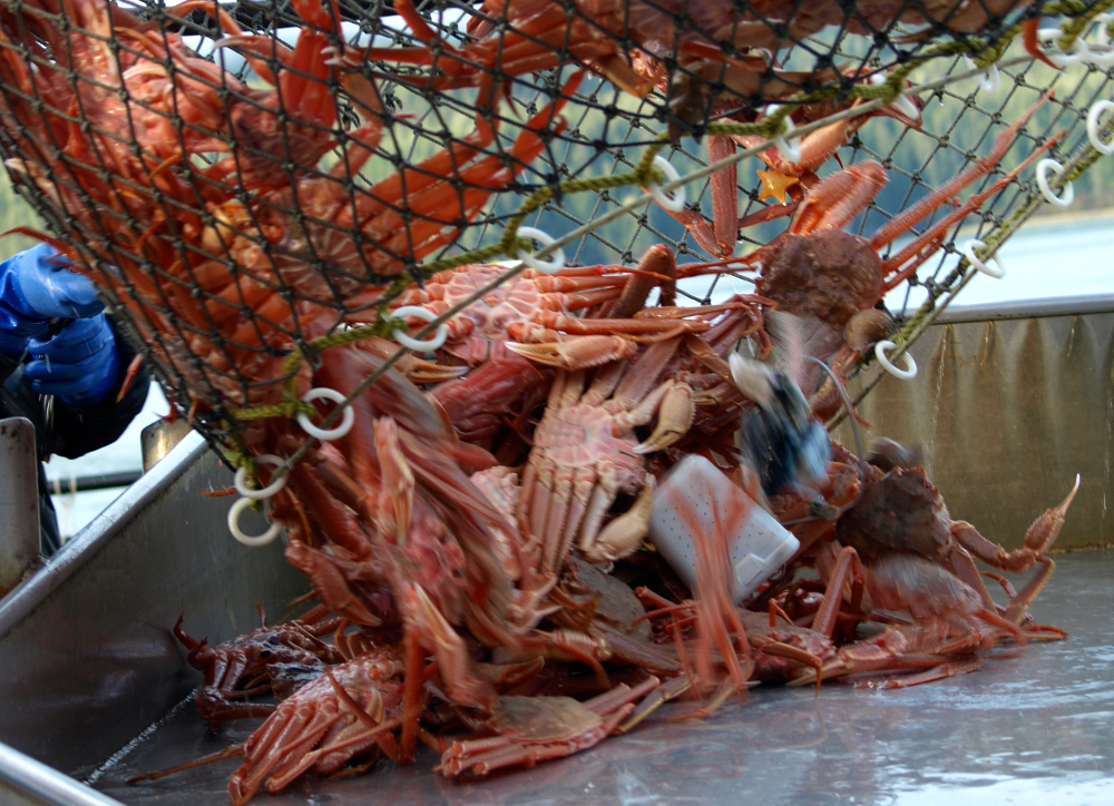 Offshore areas opened for king tanner crab in southeast for Crab fishing game