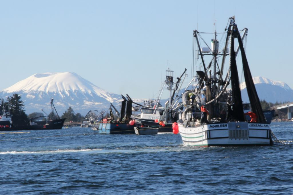 Purse seiners fish a commercial herring opening in Sitka Sound in 2014. (Photo by Rachel Waldholz/KCAW)