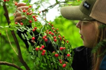 Berry pickers have another reason to leave bears alone in a patch: the benefit bears provide to the berries. (Photo by Berett Wilber/KHNS)
