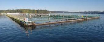 Cooke Aquaculture's Atlantic salmon farm near Bainbridge Island, Washington. (Photo courtesy Washington Department of Natural Resources)