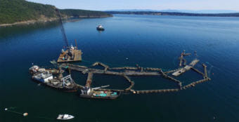 Drone view of collapsed Cypress Island net pens, which resulted in the escape of more than 200,000 non-native Atlantic salmon into Puget Sound. (Photo courtesy Washington Department of Natural Resources)